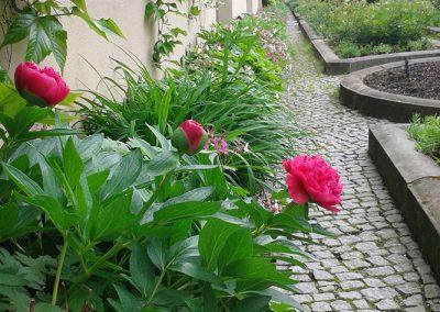 professionelle Gartenpflege: Beete auf intensiver Dachbegrünung. Buchsbaumhecken und Formgehölze, Staudenrabatten und Wechselbepflanzungen, Kübelpflanzen, Betreuung der Wintergärten