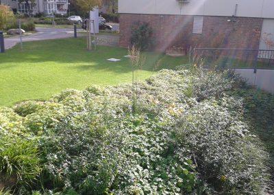 professionelle Gartenpflege: Wald- und Parkflächen, Staudenrabatten, Formhecken und frei wachsende Gehölze, Wiesenmahd, repräsentativer Eingangsbereich mit Wechselbepflanzung