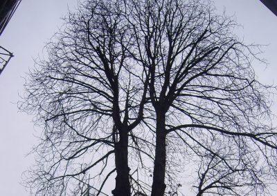 Impression aus unserer Großbaumpflege