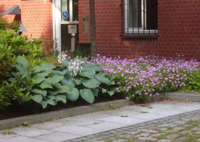 professionelle Gartenpflege: Gehölzflächen und Staudenrabatten, Formhecken und frei wachsende Gehölze, extensive Dachflächen