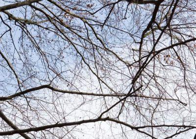 Impressionen von der Großbaumpflege des Gärtnerhofs