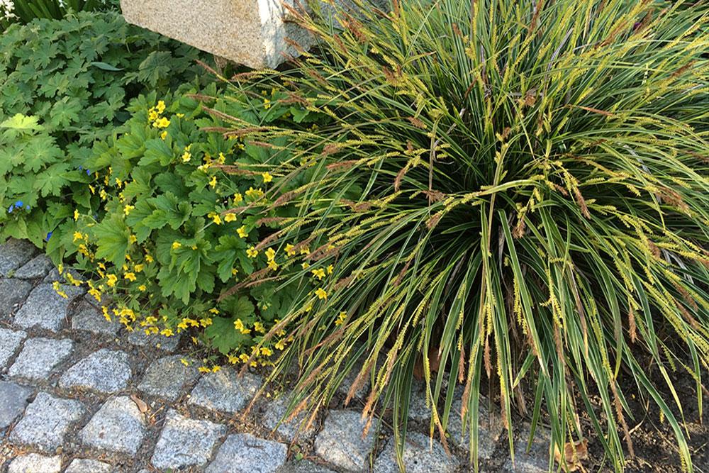 Impressionen aus einem Privatgarten