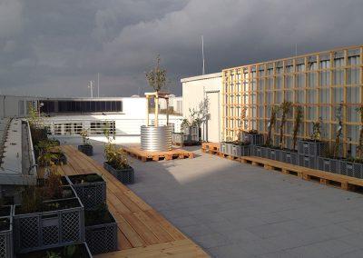 Gestaltung einer transportablen Dachbegrünung, teilweise in Kunststoffbrotkästen und verzinkten Metallkübeln