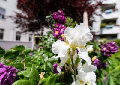 Gartenpflege: Fugger Klinik
