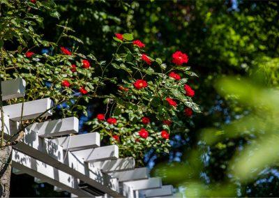 Gartenpflege: Stanford University